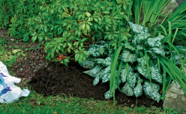 six tips for effective weed control - finegardening
