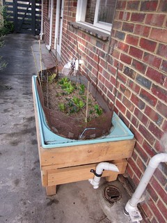 about wicking beds - the whys, hows, tips and tricks