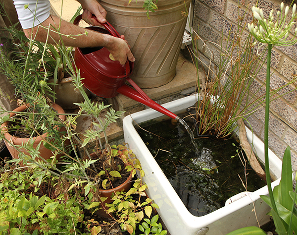 How to Make a Small Pond   Ideas for Wildlife - The RSPB