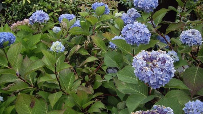 14 best plants for east facing gardens: nr. 2 is our favorite!