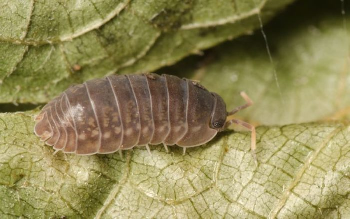 Common Garden Pests: How to Get Rid of Them | Charlie Carp