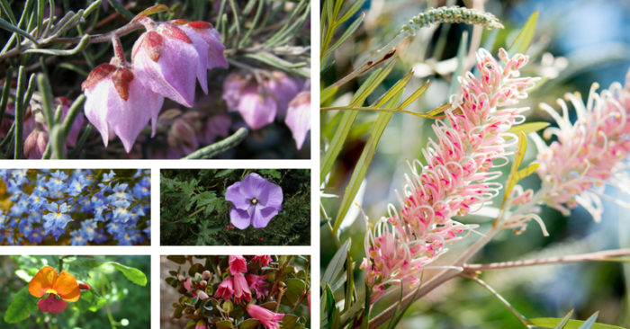 How to create a native cottage garden