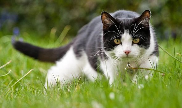 How to stop cats from pooping in the garden - top tips to stop cats fouling on your lawn
