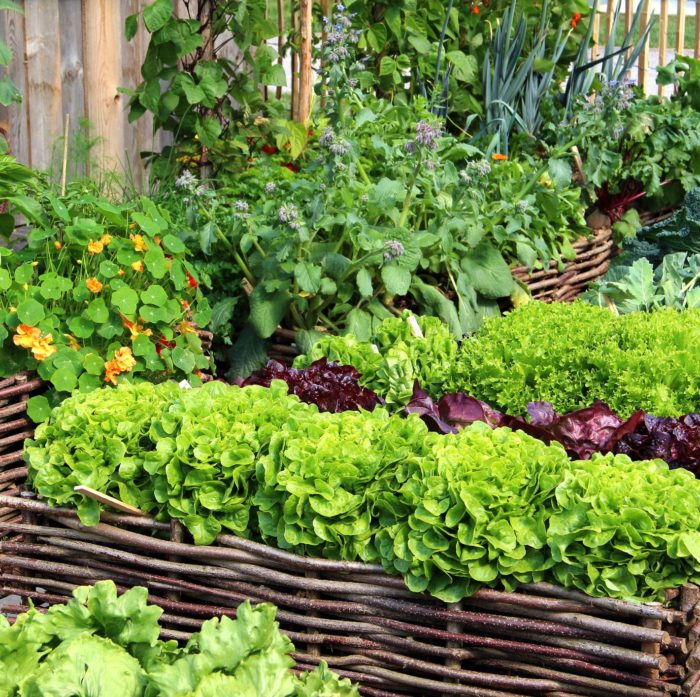 15 easy vegetables to grow in your garden this year