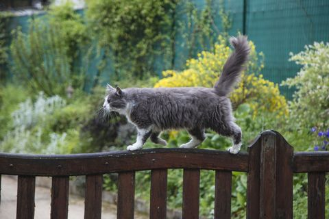How to stop cats fouling in your garden: 6 simple tips