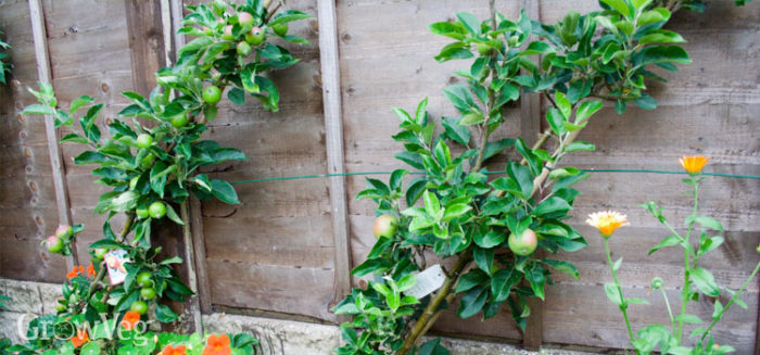 Growing Fruit and Vegetables in Small Spaces
