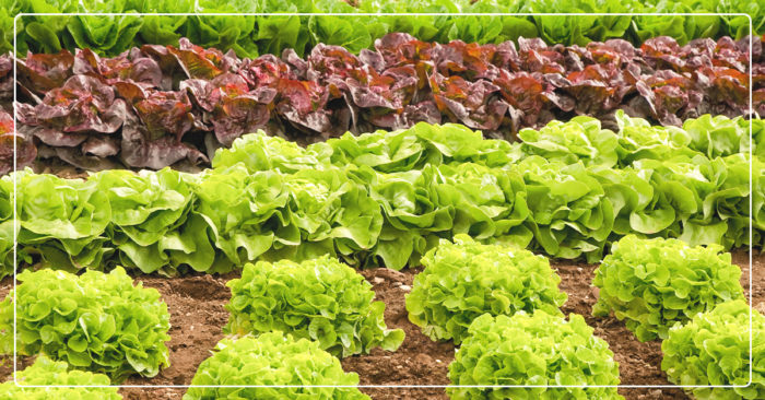 EARLY SPRING GARDENING: WHAT TO PLANT AND WHEN - IFA Country Stores
