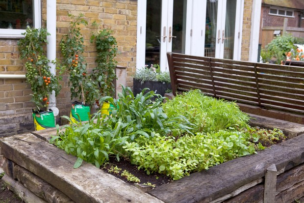 Gardening tips for raised beds