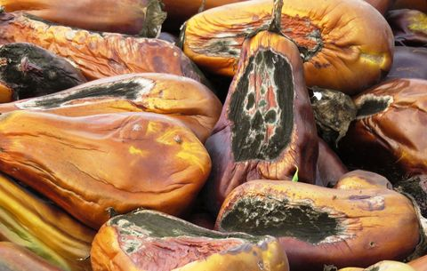 the secret to growing the most flavorful eggplants
