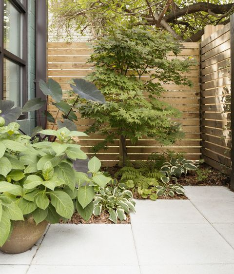 how to give your small garden the wow factor all year round