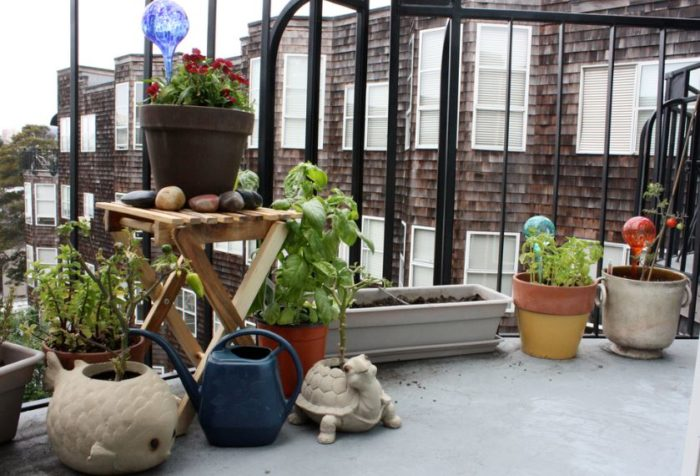 What Is A Winter Garden In A Flat: How To And Ideas