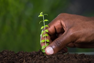 how to plant any outdoor plant in 8 steps - sloat garden center