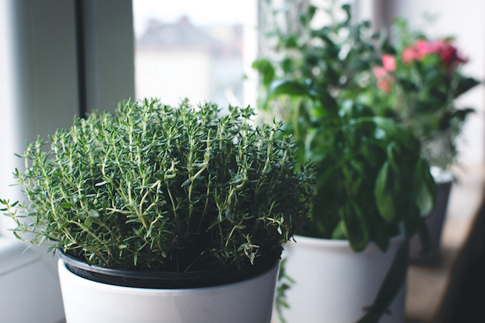 top 8 must-have herbs to grow at home - eco outdoor