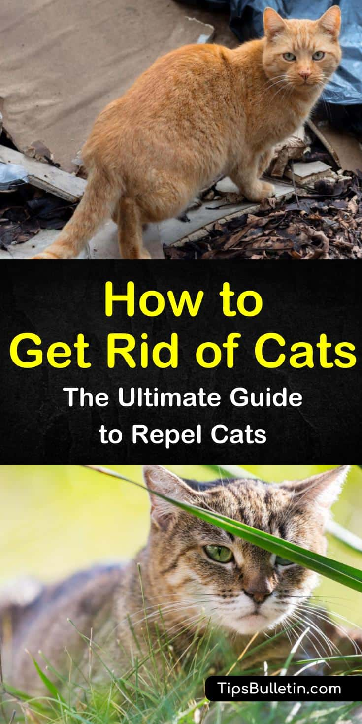 14+ ingenious ways to get rid of cats in your yard