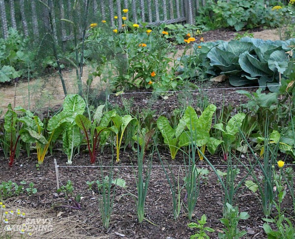 how to start a vegetable garden fast (and on a budget!)
