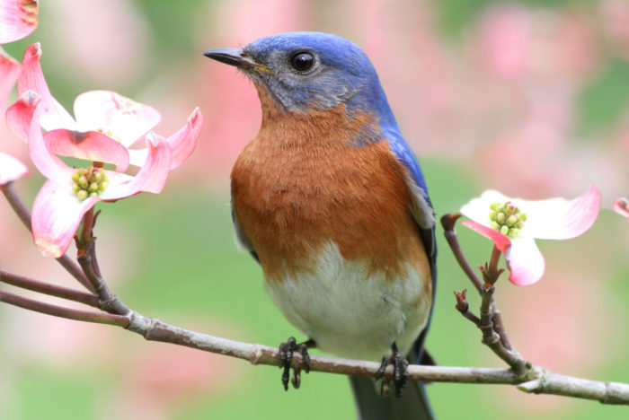 how to attract birds to your yard in 9 steps   stauffers