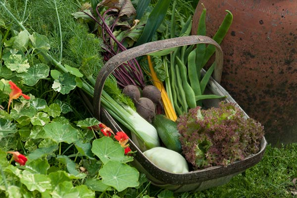 grow your own - august advice and gardening tips