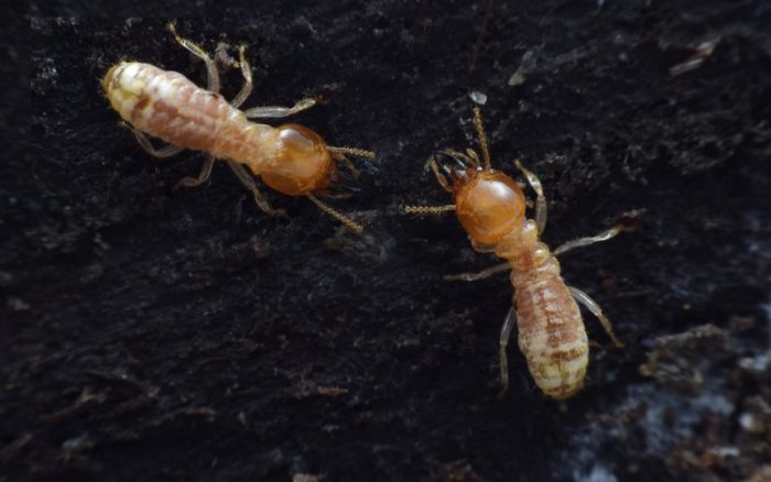 What to do if You've Found Termites in your Yard or Garden?