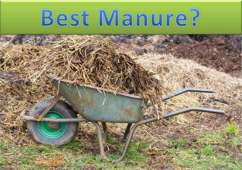 what is the best manure for your garden? - garden myths