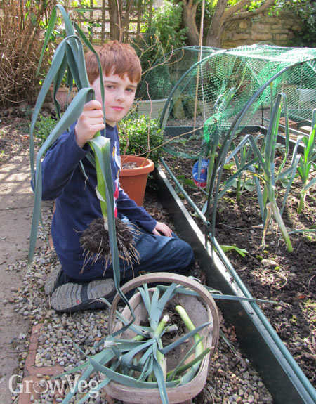 plan your first vegetable garden in 5 easy steps