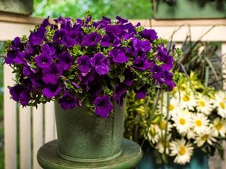 annual vs perennial – what is the difference? - garden design