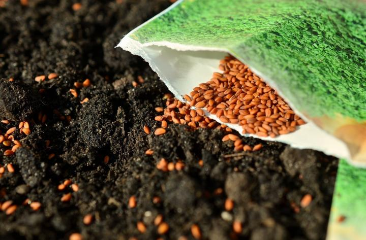 sowing seeds in the vegetable garden