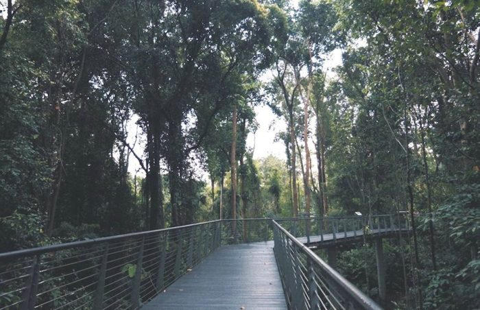 a complete guide to singapore botanic gardens: what to see, do and eat