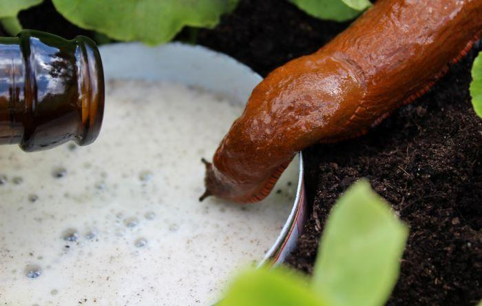 How to Get Rid of Snails In Your House and Garden [2021 Guide]