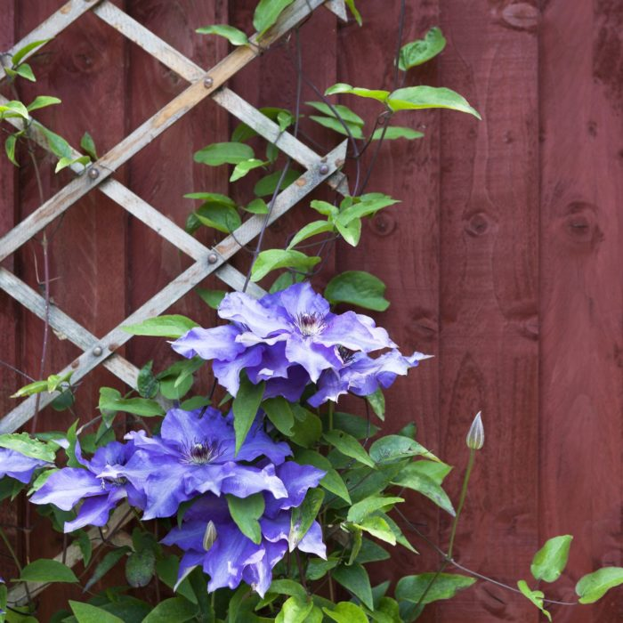These DIY Trellis Ideas Add Beauty and Function to Any Kind of Garden