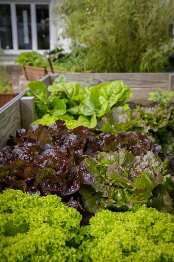 10 excellent reasons to use raised beds in your garden