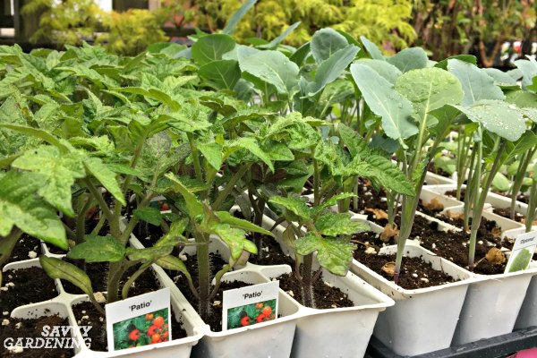 the easiest vegetables to grow in garden beds and containers