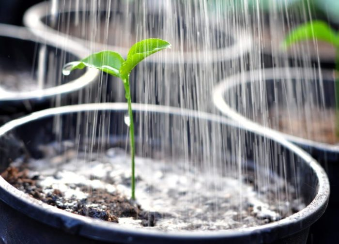 how to water outdoor plants while on vacation