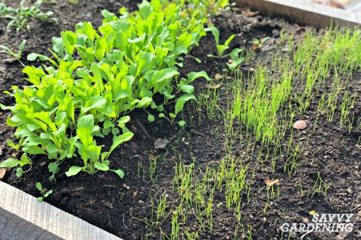 vegetables to grow in winter: 8 crops for winter harvesting