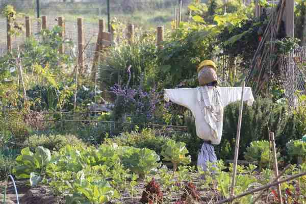 12 humane ways to keep birds out of your vegetable garden - gardening channel
