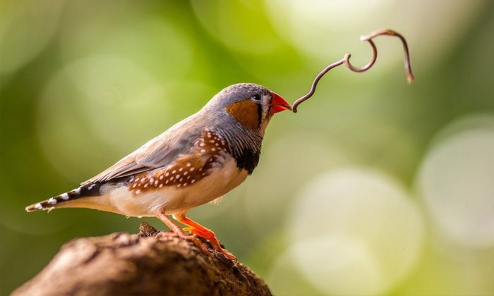 12 tips on how to attract finches to your yard (2021) | world birds