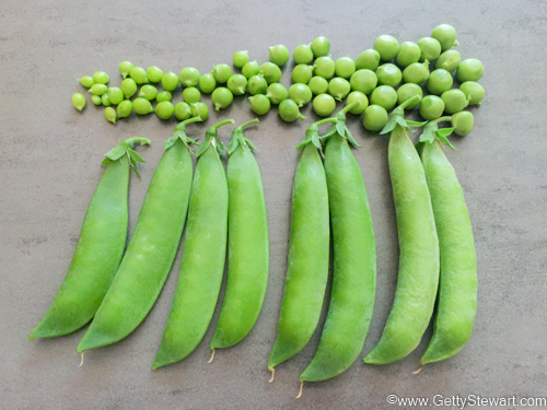 How to Blanch and Freeze Peas Fresh from the Garden - GettyStewart.com